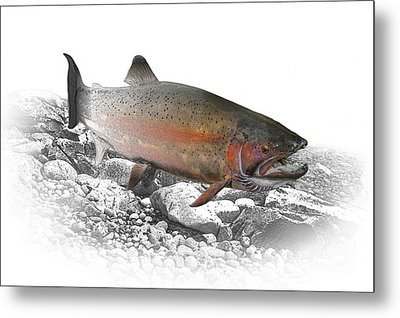 Migrating Steelhead Rainbow Trout Metal Print by Randall Nyhof