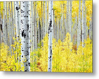 Miles Of Gold Metal Print by The Forests Edge Photography - Diane Sandoval