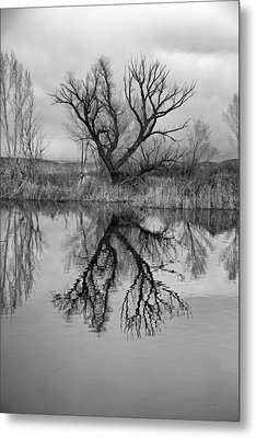 Mill Pond Tree Metal Print