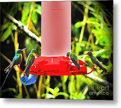 Mindo Hummer Gathering Metal Print by Al Bourassa