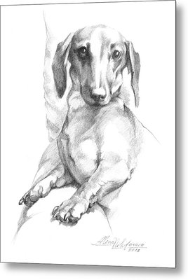 Mini Dachshund Sitting In A Chair Metal Print