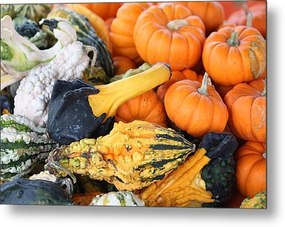 Metal Print featuring the photograph Mini Pumpkins And Gourds by Cynthia Guinn
