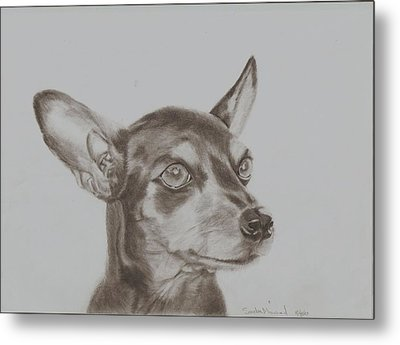 miniature pinscher Tronter Metal Print