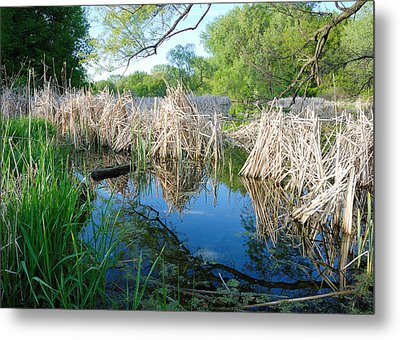 Minnesota Wetland Metal Print by Jim Hughes