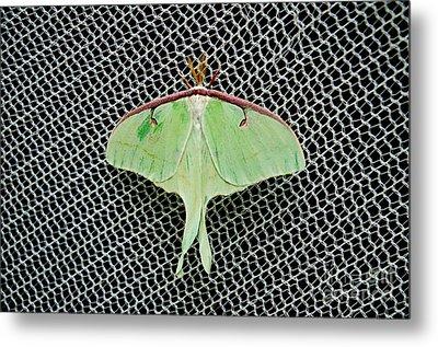 Mint Green Luna Moth Metal Print by Andee Design