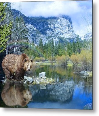Mirror Lake Bear Metal Print by Alixandra Mullins