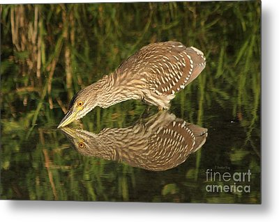 Mirror Mirror On The Wall Who Is The Fairest Heron Of All Metal Print