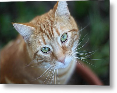 Miss Lucy Mcgillicuddy Metal Print by Melanie Lankford Photography