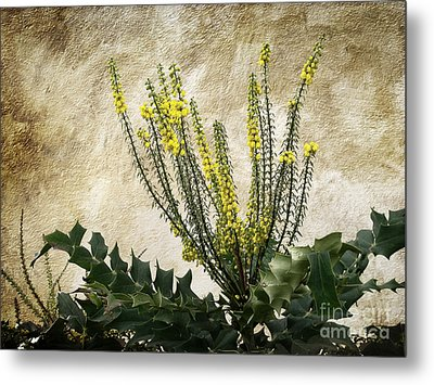 Metal Print featuring the photograph Mission Wallflower by Ellen Cotton