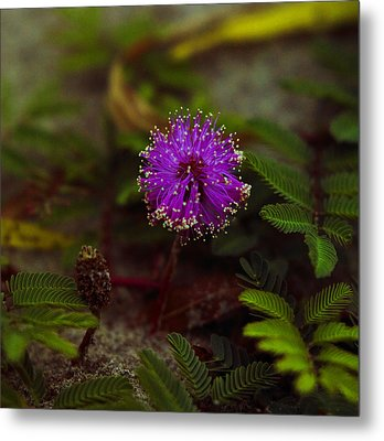 Metal Print featuring the photograph Mississippi Flower by Silke Brubaker
