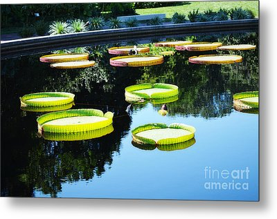 Missouri Botanical Garden Giant Lily Pads Metal Print by Luther Fine Art