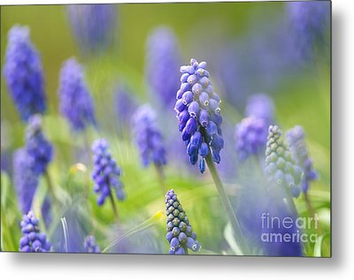 Misty Blues 2 Metal Print by Sharon Talson