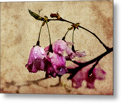 Misty Cherry Blossoms Metal Print