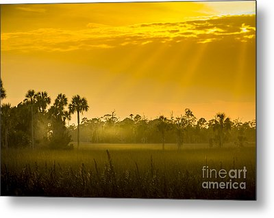 Misty Glade Metal Print by Marvin Spates