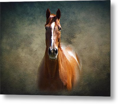 Misty In The Moonlight Metal Print by David Dehner