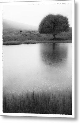 Misty Morning By The Pond Metal Print by Cristel Mol-Dellepoort