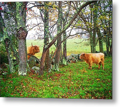 Misty Morning Conversation Metal Print