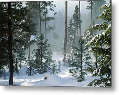 Misty Morning Snow Metal Print by Annie Pflueger