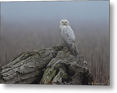 Metal Print featuring the photograph Misty Morning Snowy Owl by Daniel Behm