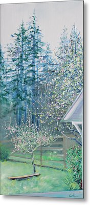 Misty Morning With Apple Blossoms And Redwoods Metal Print by Asha Carolyn Young