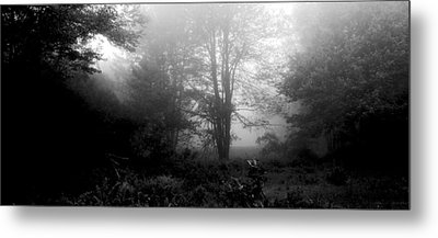Misty Morning With Tree Silhouettes Metal Print