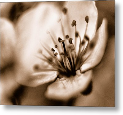 Metal Print featuring the photograph Misty Plumb Blossom by Robert Culver
