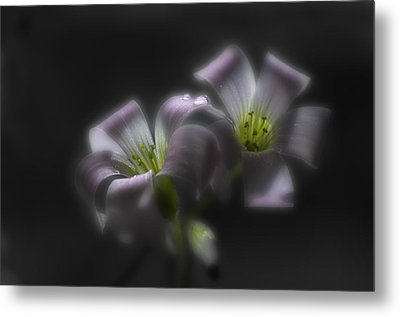 Misty Shamrock 2 Metal Print