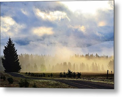 Misty Spring Morning Metal Print by Annie Pflueger