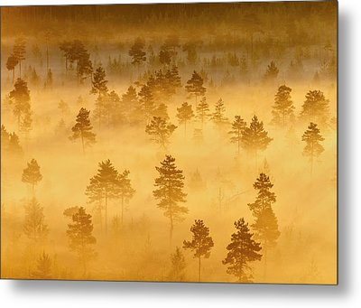 Misty Trees In The Morning Metal Print