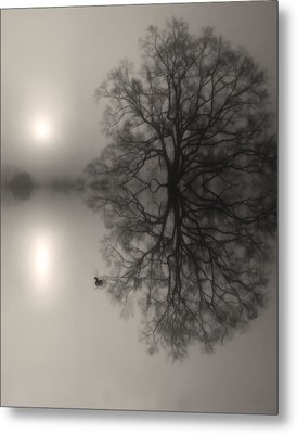 Misty Water Oak Metal Print