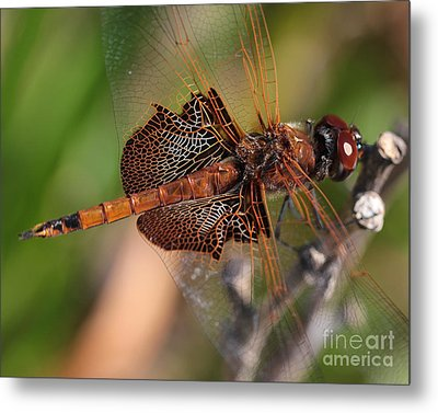 Mocha And Cream Dragonfly Profile Metal Print
