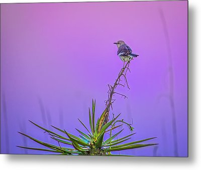Metal Print featuring the photograph Mocking The Yucca by Rob Sellers