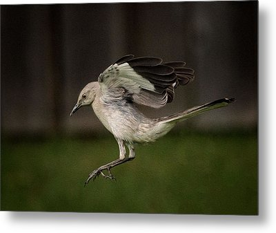 Mockingbird No. 2 Metal Print by Rick Barnard