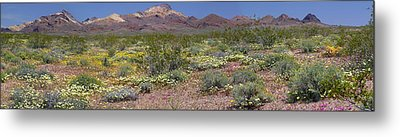 Mojave Desert Floral Display Metal Print