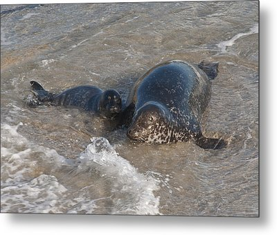 Metal Print featuring the photograph Mom And Baby Harbor Seal by Lee Kirchhevel