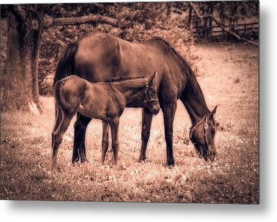 Mom And Foal Metal Print by Mary Timman
