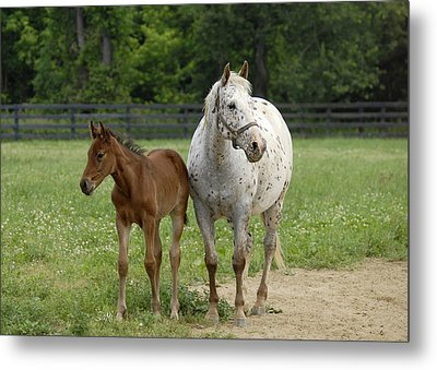 Metal Print featuring the photograph Mom And Foal by Sami Martin