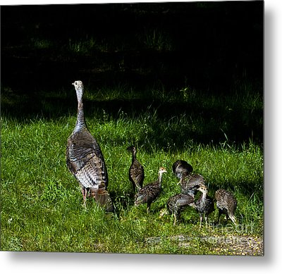 Mom..he Is Looking At Us Again Metal Print by Timothy J Berndt