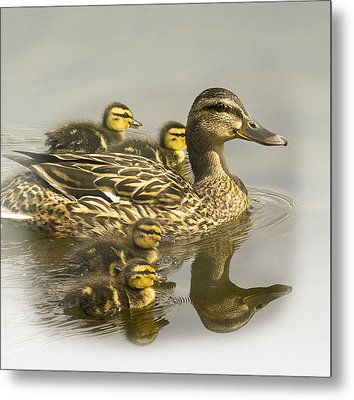 Momma And Babies Metal Print by Sonya Lang