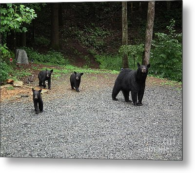 Momma And Three Bears Metal Print by Jan Dappen