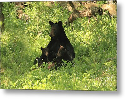 Metal Print featuring the photograph Mommy And Babies by Geraldine DeBoer