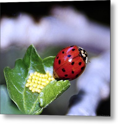 Metal Print featuring the photograph Mommy Ladybug by Yvonne Emerson AKA RavenSoul