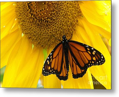 Monarch And Sunflower Metal Print by Ann Horn