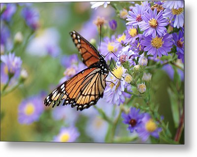 Monarch Butterfly 3 Metal Print