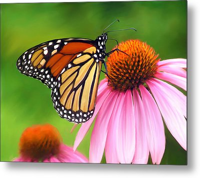 Monarch Butterfly Metal Print by Christina Rollo
