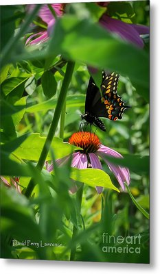 Monarch Butterfly Deep In The Jungle Metal Print by David Perry Lawrence