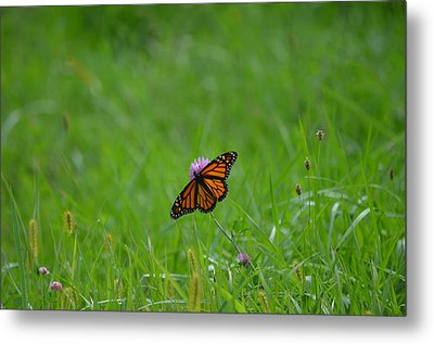 Metal Print featuring the photograph Monarch Butterfly by James Petersen