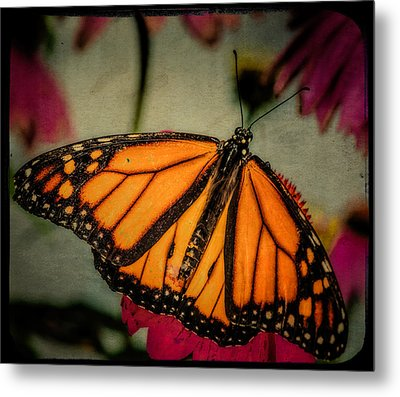 Monarch Butterfly Metal Print by Linda Karlin