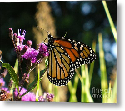 Metal Print featuring the photograph Monarch Butterfly by Lingfai Leung