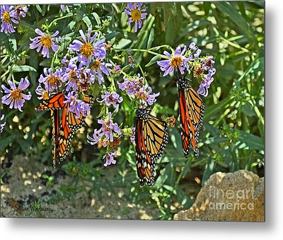Monarch Butterfly Trio Metal Print